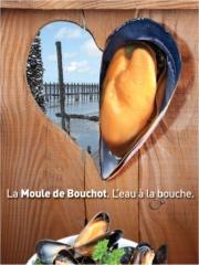 Moules de bouchot (08/2013)